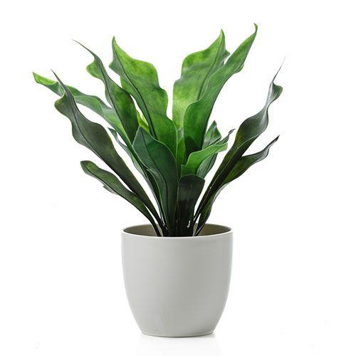 Succulent Bush