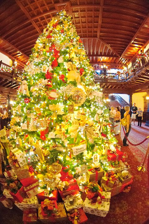 hotel del coronado lobby and christmas tree 2012 as seen with an 8 mm fish - Mm Christmas Lights