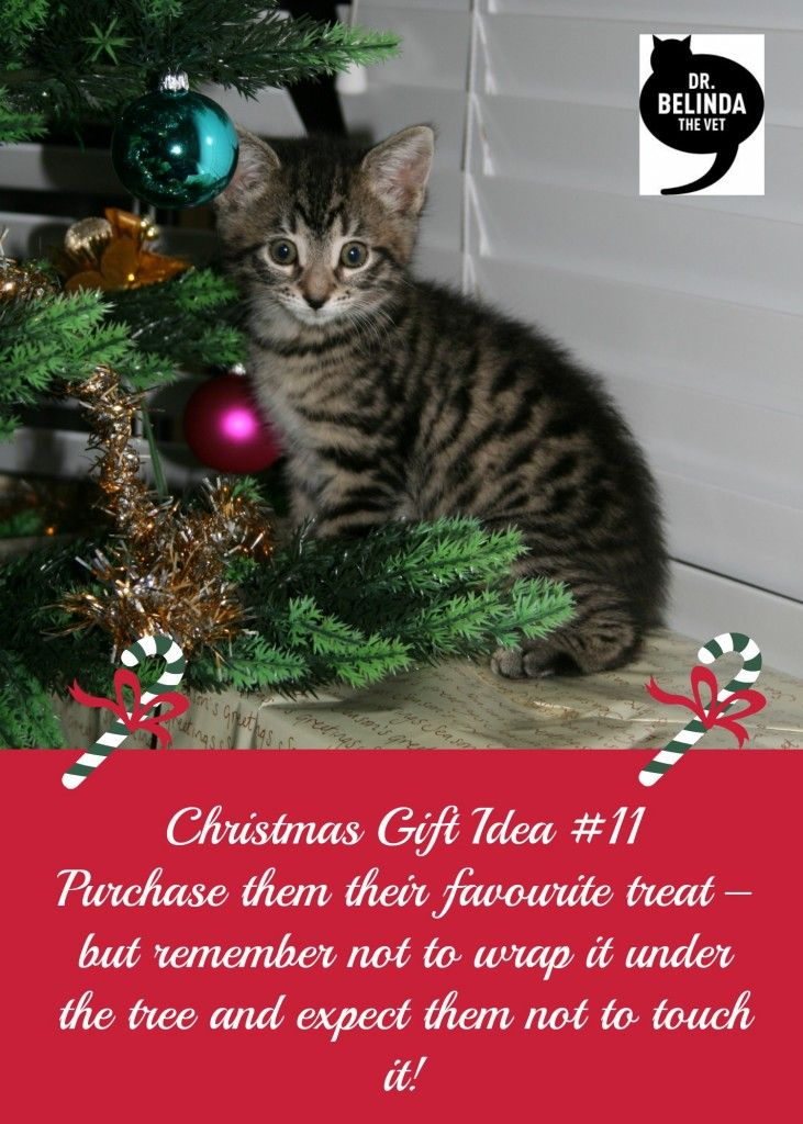 Christmas Gift idea 11 - Purchase them their favourite treat – but remember not to wrap it under the tree and expect them not to touch it!