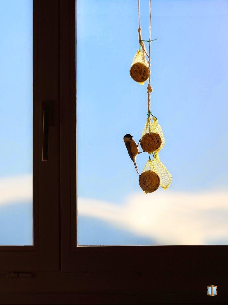Watching through a window to see a bird eating - Cinege etetés az ablakból nézve