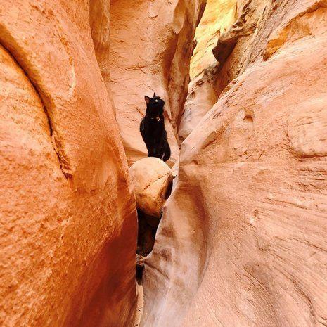 Craig Armstrong, Millie gazdája mindig magával viszi kedvencét hegymászós kalandjaira és túráira.