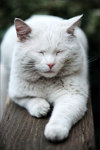 I'm So Tired, cat  [previous pinner's perfect caption!]