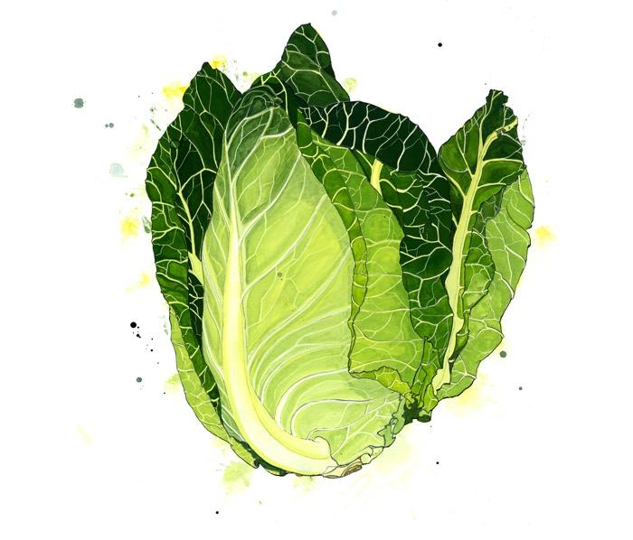 Emma Dibben pointed cabbage