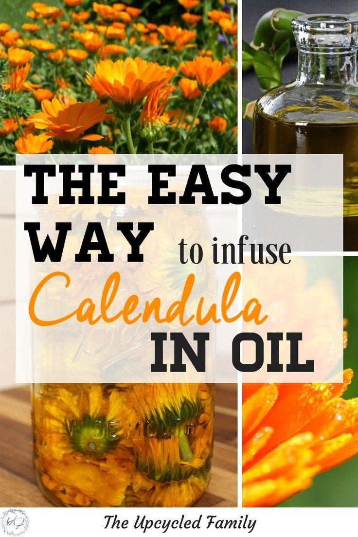 The calendula flower has many AMAZING benefits. How to