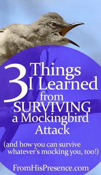3 things I learned when I survived a mockingbird attack - and how you're going to survive whatever's mocking you today too! God is greater and the enemy has no power over you!