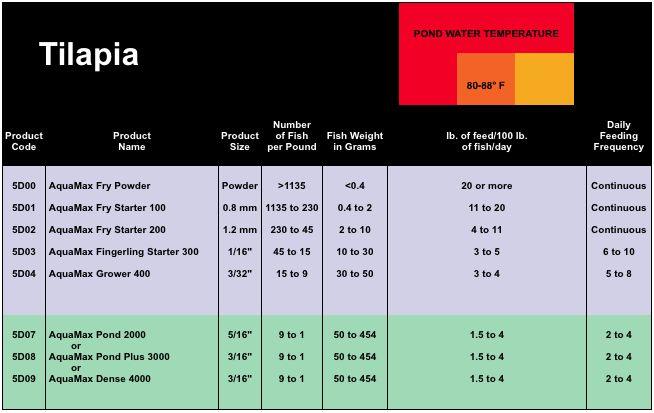 Tilapia Farming Guide. Understanding the five needs of tilapia.