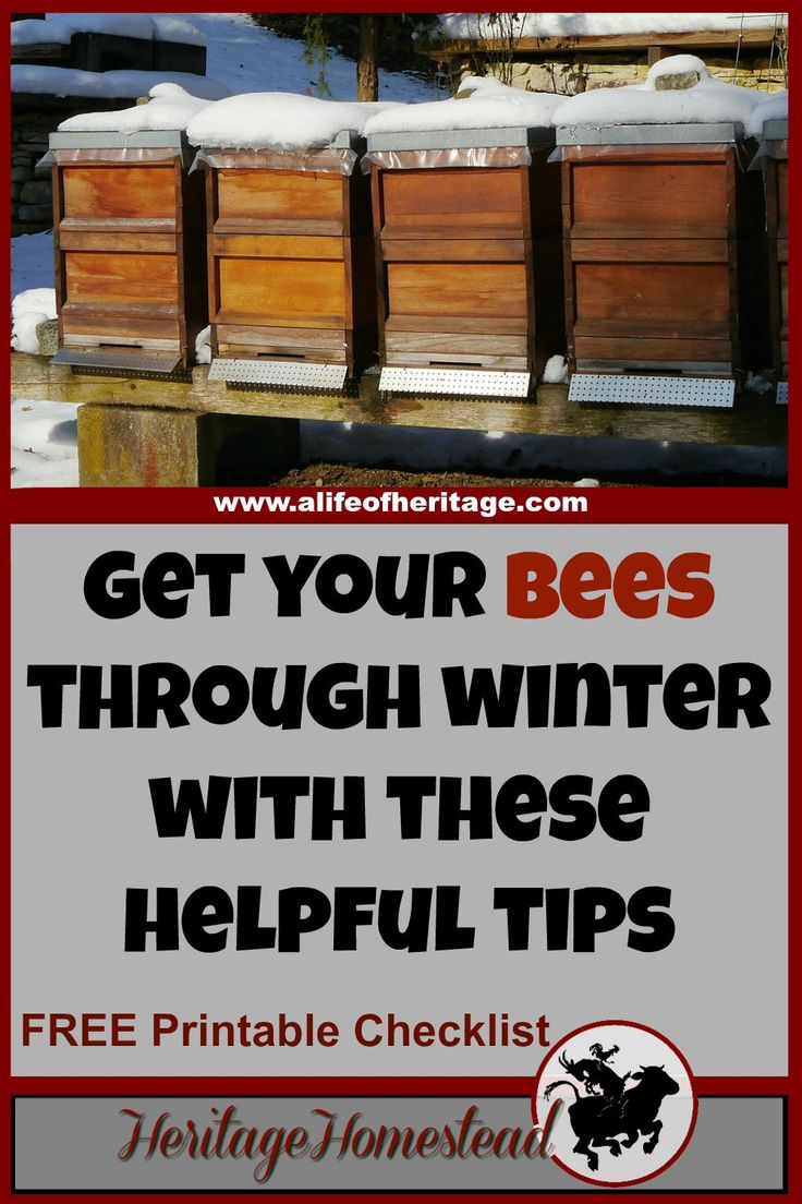 These 6 tips to winterizing bee hives will give you and your bees the boost they need to get through the winter months into spring and blooming flowers!
