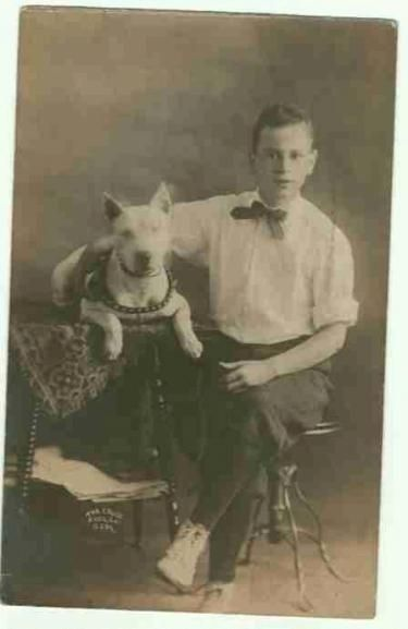 vintage pit bull photos | Pit Bulls in Time, Vintage Pitbull Pictures