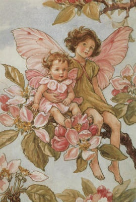 All Cicely Mary Barker Fairies - Bing Images