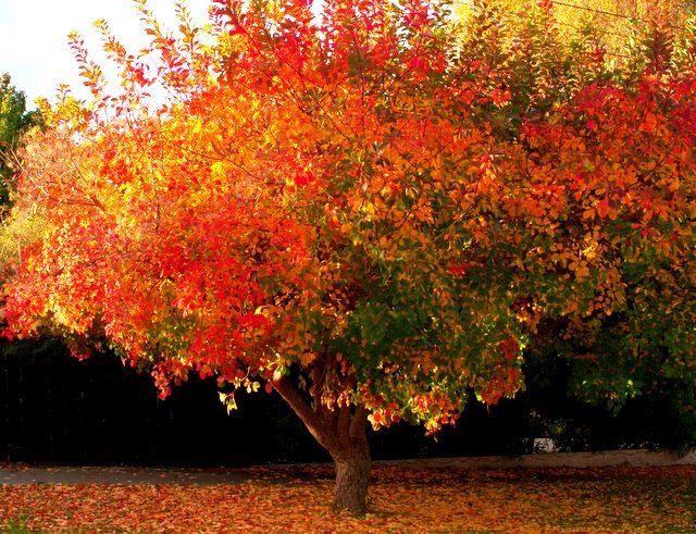 south canterbury autumn