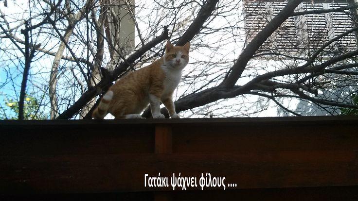 γατάκι -Λεμεσός
