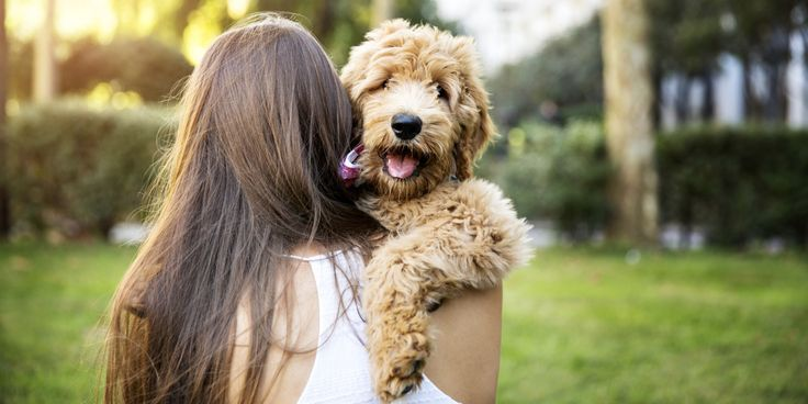 ТЕСТ! Кто тебе нужен парень или собака? #фан #развлечения #пройтитест #Тест #мужчина #собака