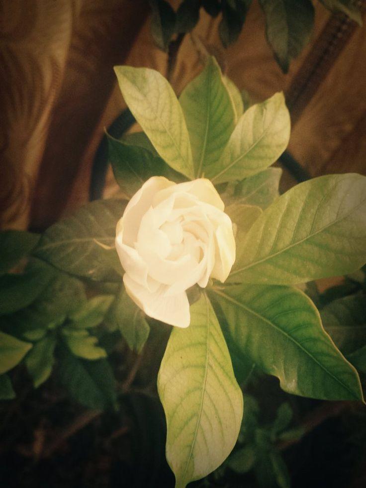 Gardenia's Birth by GhadaCamelia