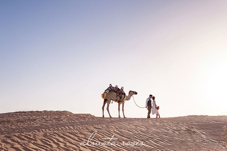 Dubai Wedding | Destination wedding |  camel and sand  Almota Roses Photography