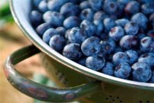 Vriezeveen - blauwe bessen
