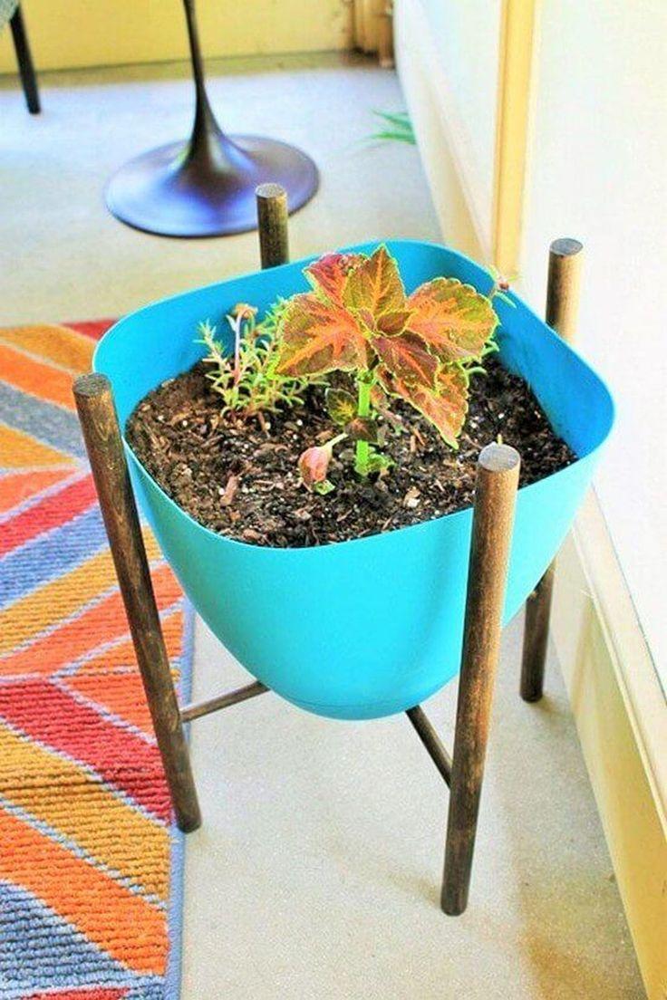 163 best Plants Ideas images on Pinterest