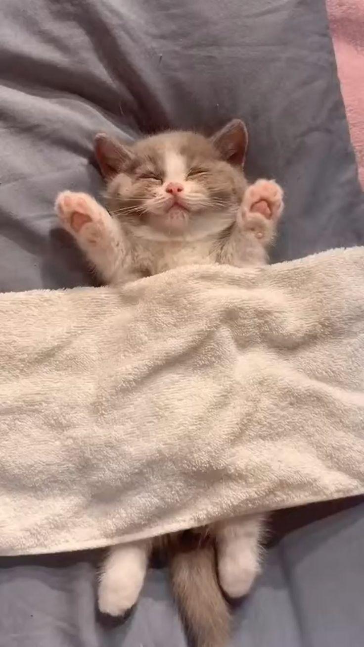 авиашоу вскоре картинки кошек и котят смешные гифки странице