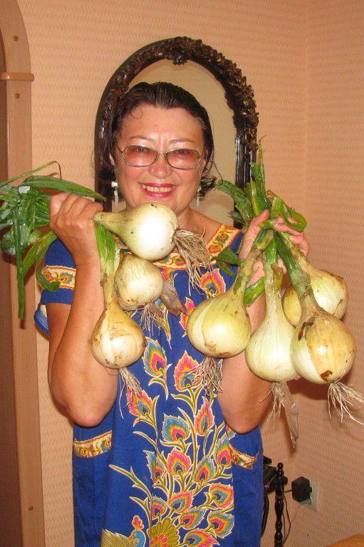 Выращивание лука из семян-чернушки:
