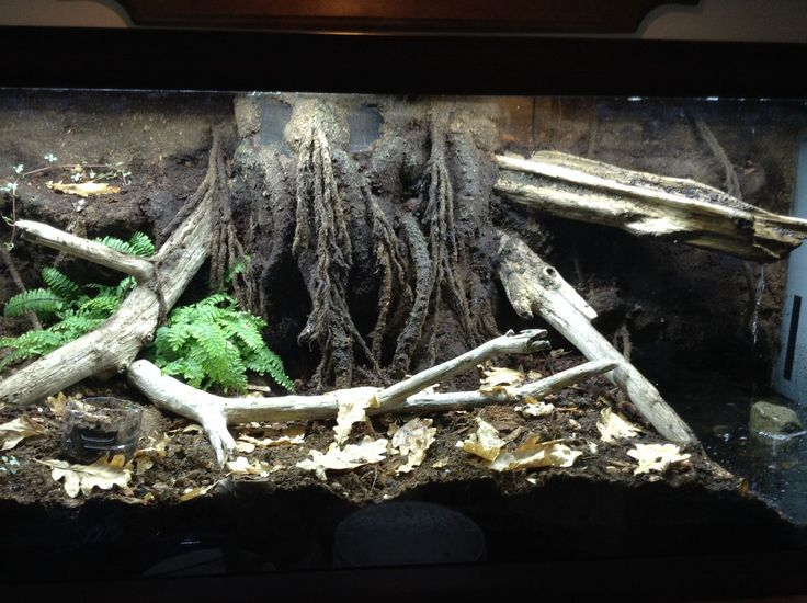 17 Best Images About Crabitat On Pinterest Aquascaping
