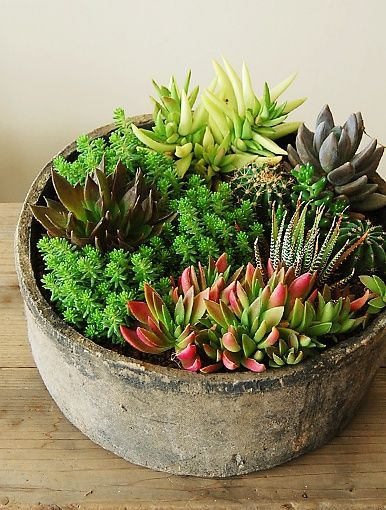 Love the rustic planter full of succulents...nice use of color and texture...