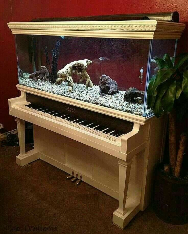 Piano aquarium awesome idea. I see old cheap pianos at the thrift shops all the time. Totally going to get one for my 55 gallon aquarium give it a nice, fun paint job and turn it  into a aquarium stand.