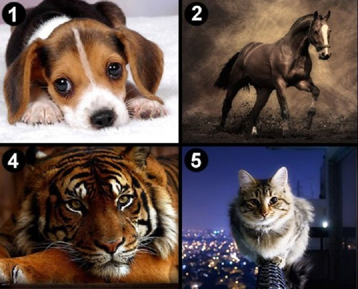Válassz egy állatot és tudd meg mit árul el a személyiségedről!