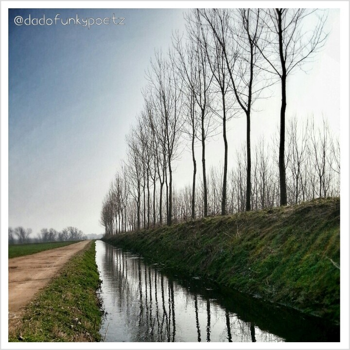 Prima uscita della stagione in #mountainbike. #ParcoTicino, La Sforzesca - #Vigevano. #riflessi #natura #alberi #acqua #canale #campagna