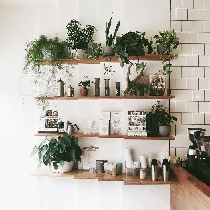 prateleiras com plantas.
