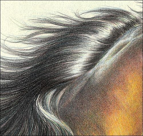 How to draw realistic hair in colored pencil