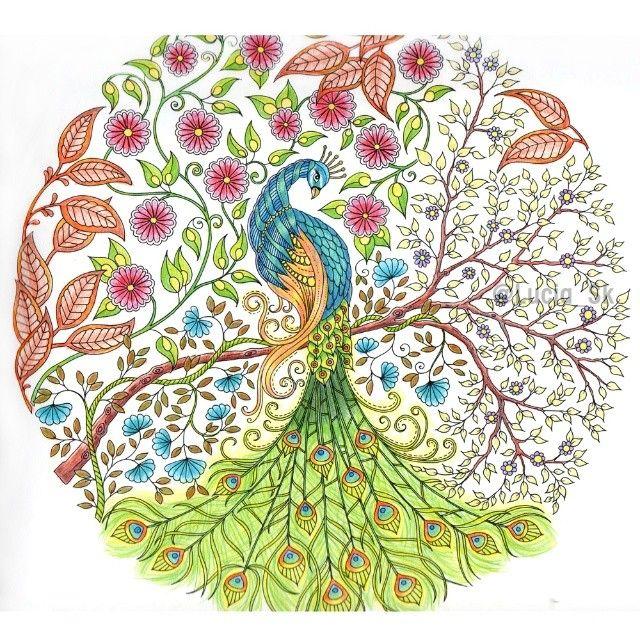 Peacock from Secret Garden #coloringbook #colouringbook #adultcoloringbook #livrosdecolorir #arteterapia #secretgarden #eljardinsecreto #jardimsecreto #tajomnazahrada #johannabasford #maped #colorpeps #colorindo #peacock #pavoreal #pavao #pav