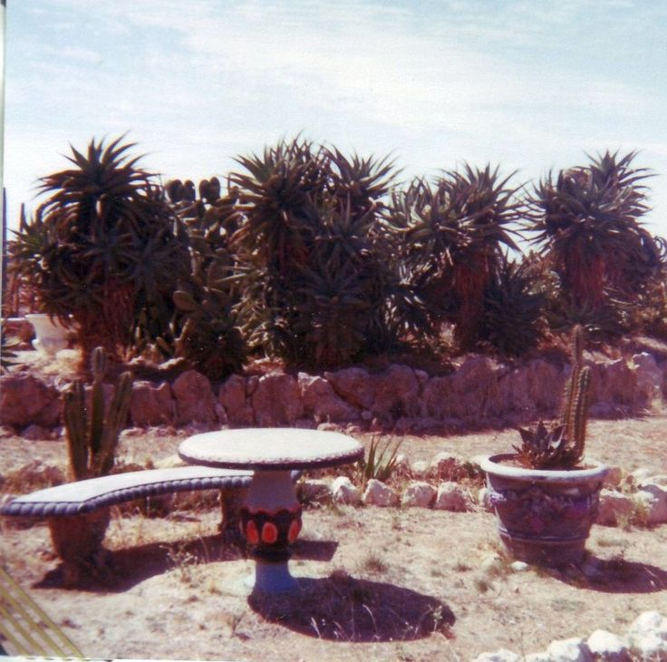 arizona-cactus-ranch-cactus-ranch-cactus-garden-jo11.jpg (896×889)