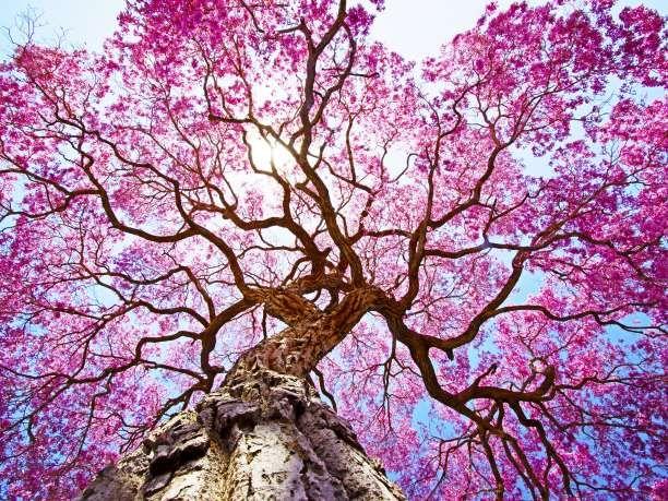Τι δέντρο – προσωπικότητα είσαι; Κάνε το κέλτικο τεστ! via @enalaktikidrasi