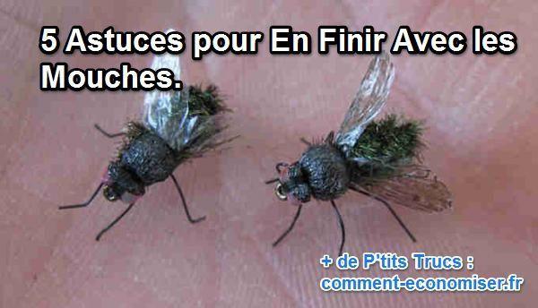 Petites mouches, grosses mouches, mouches vertes... voici 5 astuces de…