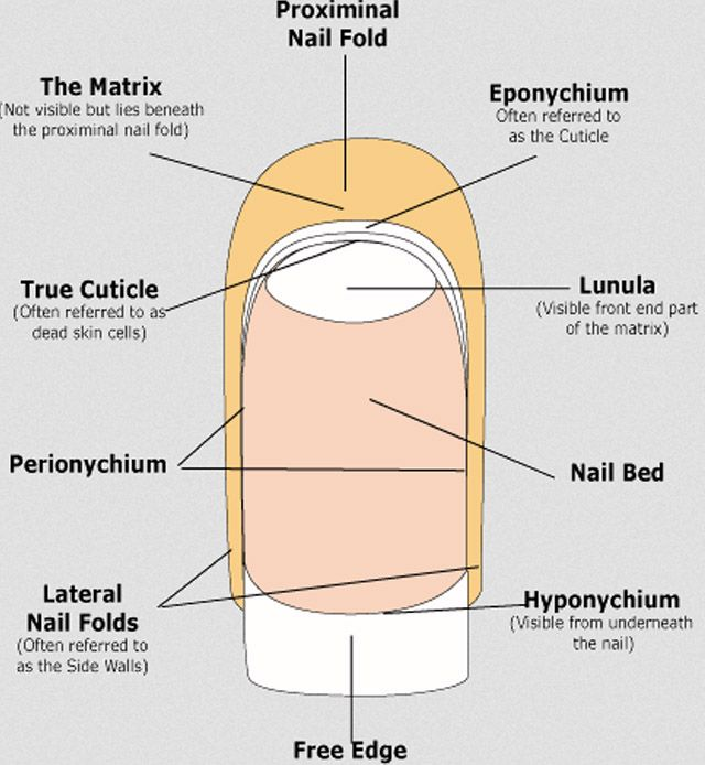Our Essential Cuticle Care Guide