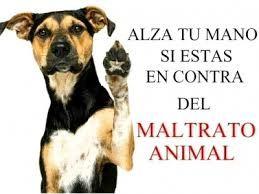 TOUCH esta imagen: No al maltrato animal. by deisy