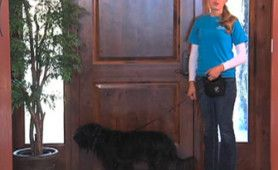 Is your dog a door dasher? Does he drag you through the door or make a run for it as soon as the door opens? Trainer Mikkel Becker teaches you the fundamental tools you need to train your dog to wait at the door until released.