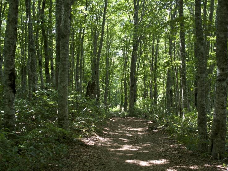 Green forest (Mt. Bandai,Fukushima, JAPAN)