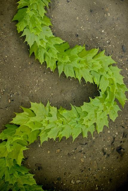 Leaf Chain: Andy Goldsworthy Homageby Klynnew