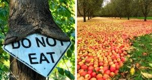 20Photos Which Prove That Nature Doesn't Care About What People Want