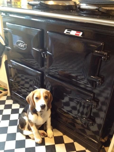How cool does Iolo the Beagle look in front of this beautiful black AGA?!