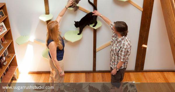 Katzenshop-Inhaberin Rebecca Mountain hat das Haus ihrer Freunde Eliza und Tiffany in ein großes Katzenparadies verwandelt.