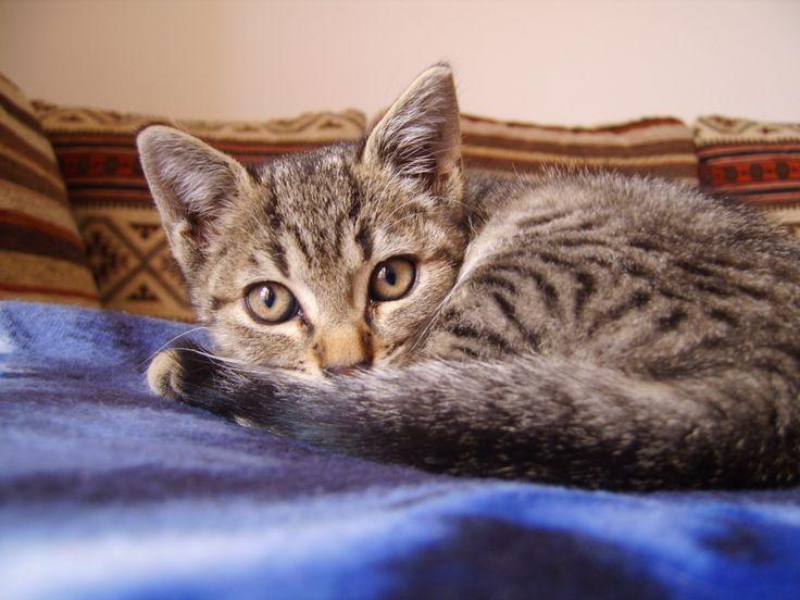 Say hi to my little girl Panda #cat #littlefriend #igerscat #loveanimals #ilovecats #AlbertoAdami