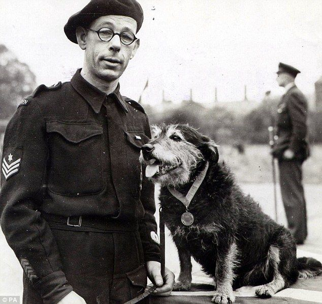 Second World War rescue dog Rip, pictured here with his handler, is currently (Aug 2014) being celebrated as part of a project to remember little-known heroic figures throughout history. Rip, searched for people buried in the rubble after bombing raids during the London Blitz. He was originally found in Poplar, London, in 1940 by an air raid warden, and was awarded the Dickin Medal for bravery in 1945.