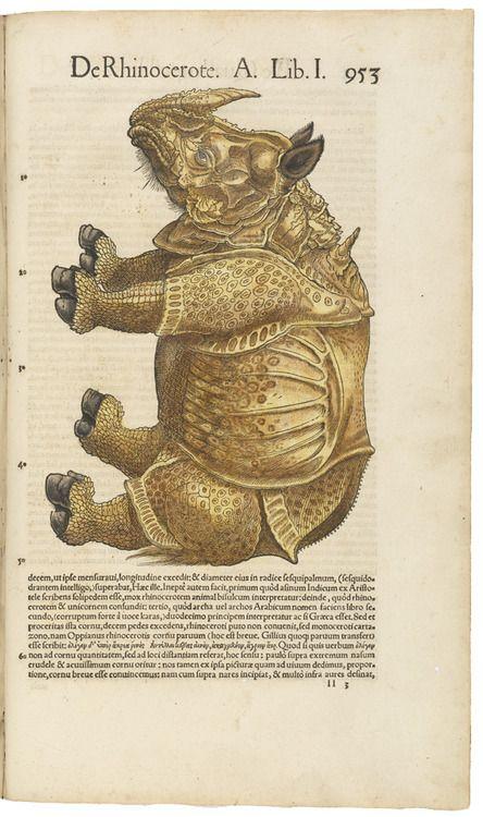 Konrad Gesner, De Rhinocerote, 1551. Letterpress, woodcut, hand-colored. Germany. Via Getty Museum