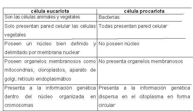 Cuadros Comparativos Entre Célula Procariota Y Eucariota Cuadro Comparativo Celula Procariota Y Eucariota Procariota Y Eucariota Procariota
