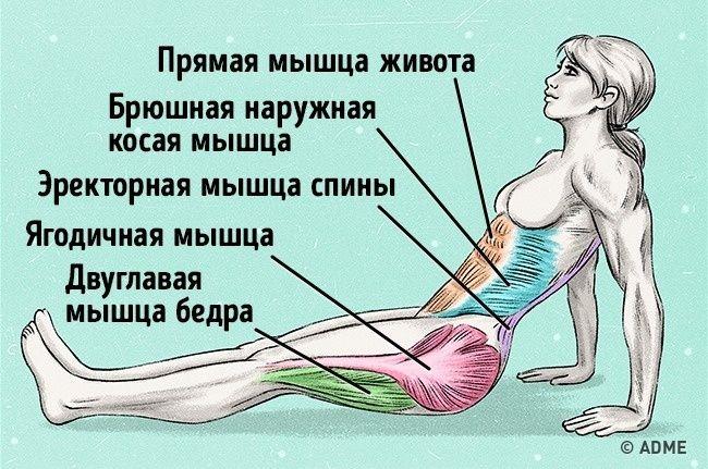 Простое упражнение сжиагет жир и исправляет осанку. Обсуждение на LiveInternet - Российский Сервис Онлайн-Дневников