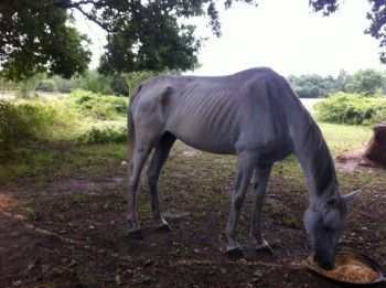 5 CLICKS TO HELP this HORSE, PLEASE CLICK 5 TIMES on the red dot : http://www.actuanimaux.com/a-parrainer/animaux/kemour-des-lauriers-cheval-denutri-demuscle-carence-et-parasite