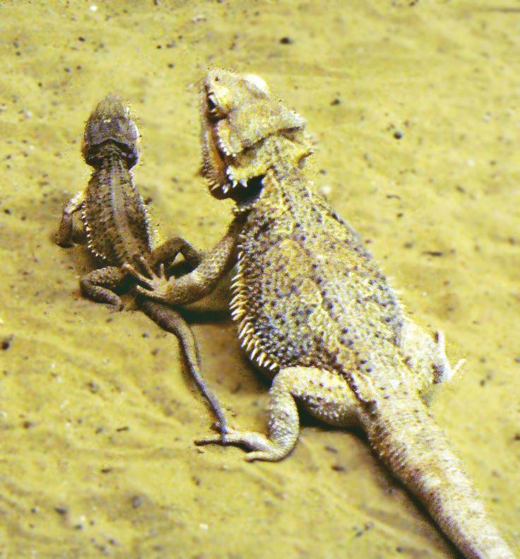 Lizards - Gyíkok Photo: Beata Bauer