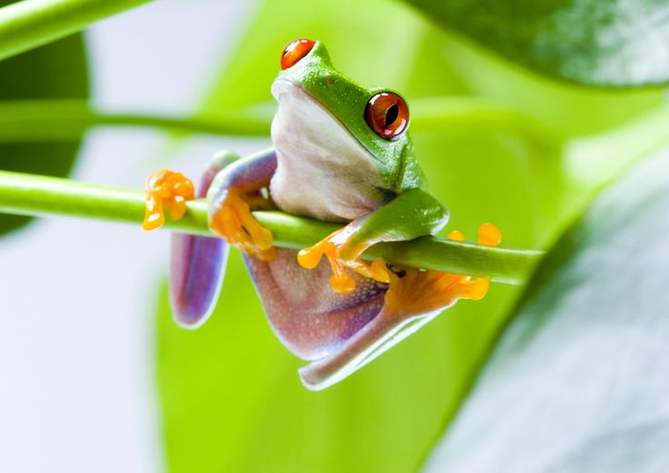 #1858042, tree frog category - High Resolution Wallpapers tree frog pic