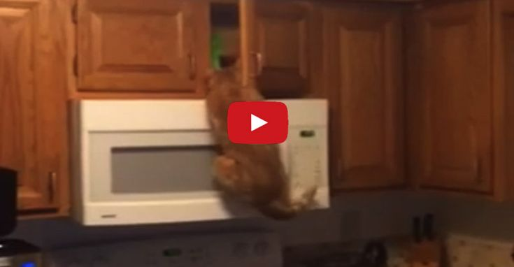 Monkey Cat Steals The Treats